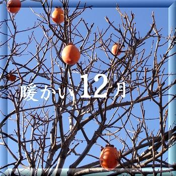 12月の柿